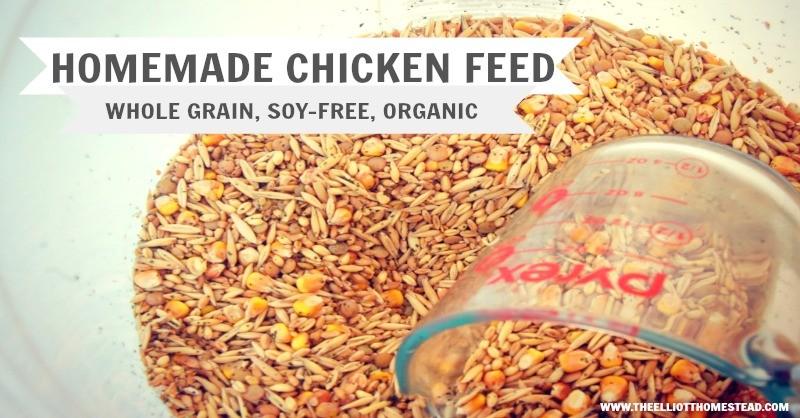 Organic Homemade Chicken Feed | Momof6